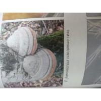 Трутовик настоящий (Fomes fomentarius), 1 кг