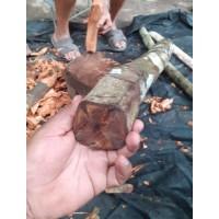 Клавохуаска, кора. (Tynanthus Panurensis, Clavo Huasca)