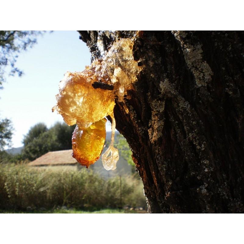 Натуральная смола дерева Копаиба в чистом виде. Доставка прямо из Перу.
