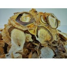 Гриб весёлка обыкновенная (земляное масло)  (лат. Phallus impudicus). Гриб против опухолей.