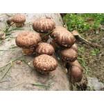 """Анализ лекарственных свойств 14 видов грибов. На основе труда Т.В. Тепляковой """"Грибы против вирусов"""""""