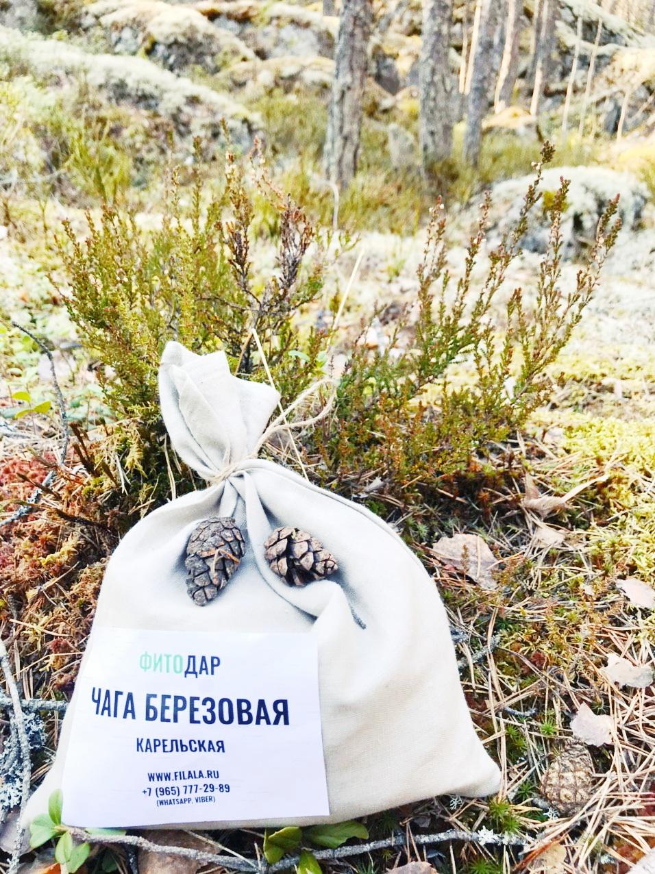 Рецепты приготовления гриба Чага