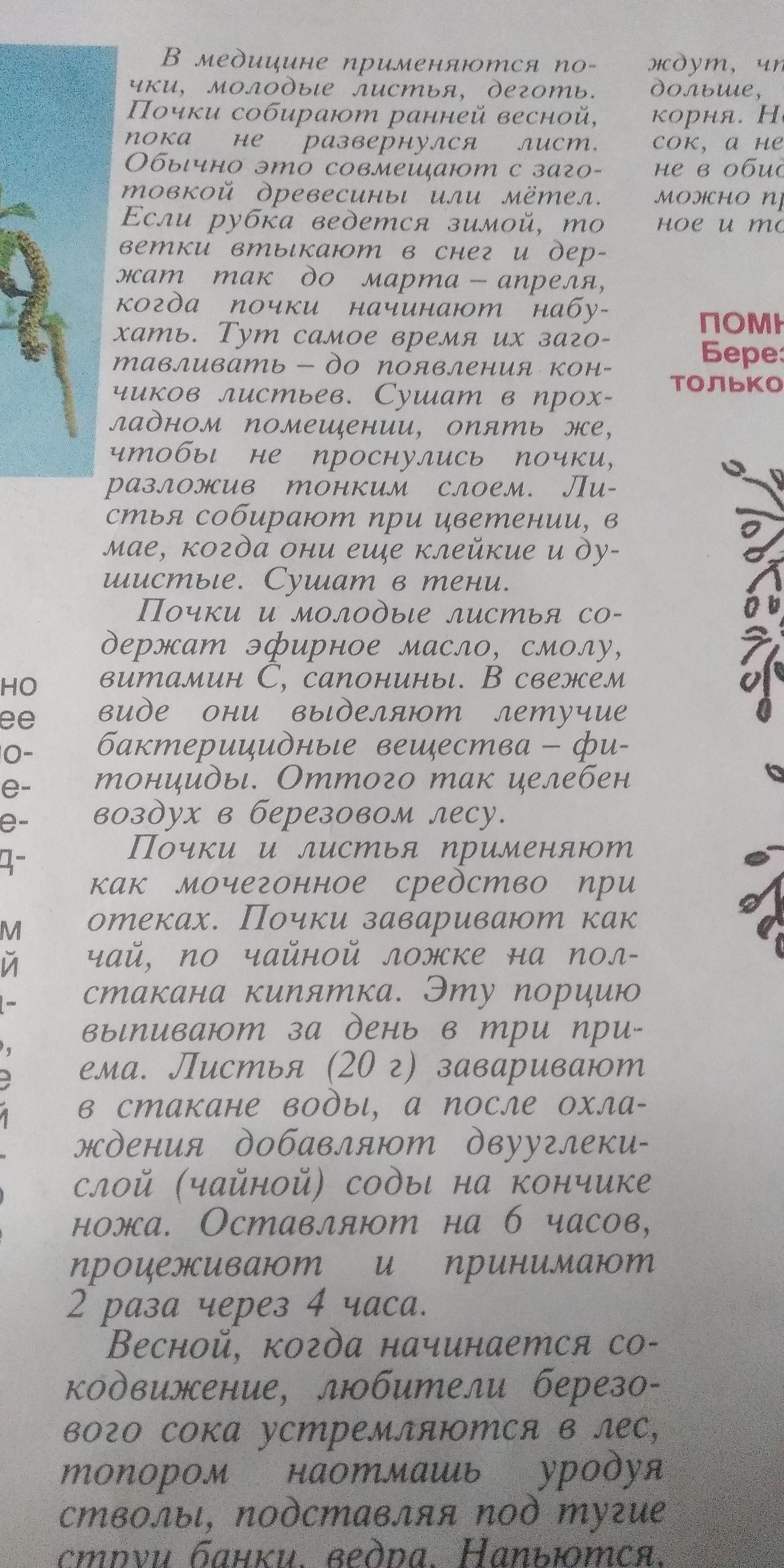 Берёзовые почки купить СПб.
